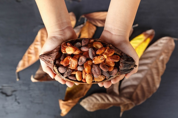 Droge cacaobonen bij de hand