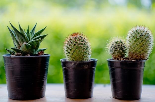 Droge cactus met de aard en de grote zon falre