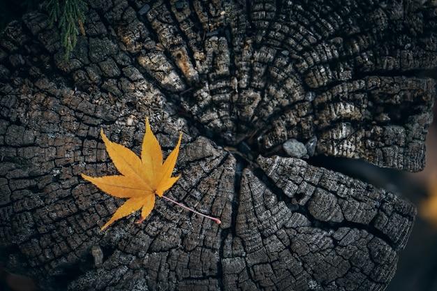 Droge esdoornbladeren vallen op de grond. het mos is overal dicht bedekt.