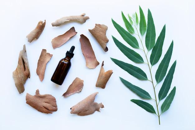 Droge eucalyptusschors met etherische olie en tak met bladeren