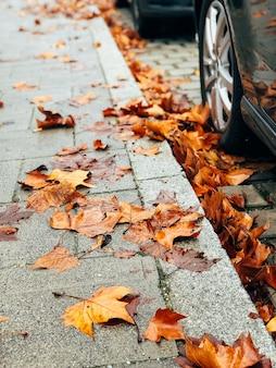 Droge gele herfstbladeren op de stadsstoep
