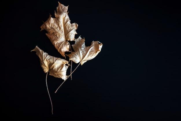 Droge herfstbladeren geïsoleerd op zwart met ruimte, herbarium