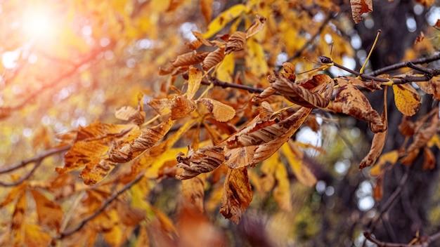 Droge herfstbladeren in het bos aan een boom op een zonnige dag