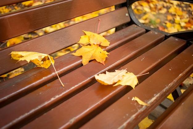 Droge herfstbladeren liggen van dichtbij op een parkbank