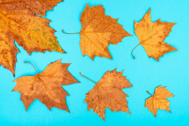 Droge herfstbladeren op een blauwe achtergrond.