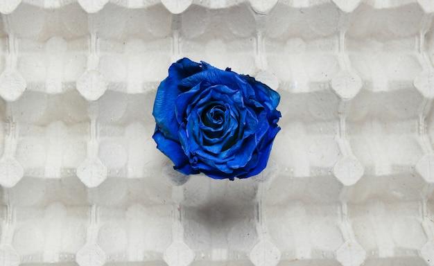 Droge knop van blauwe roos in eieren lade