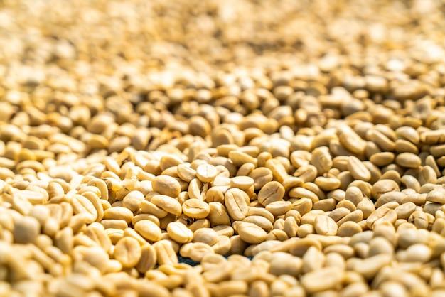 Droge koffiebonen met zonlicht