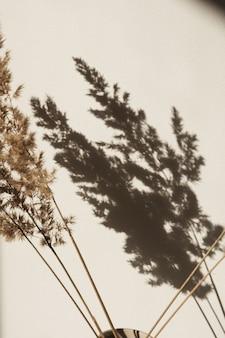 Droge pampagras rietschaduwen op de muur. silhouet in zonlicht