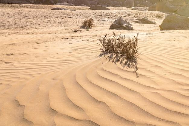 Droge plant in de woestijn