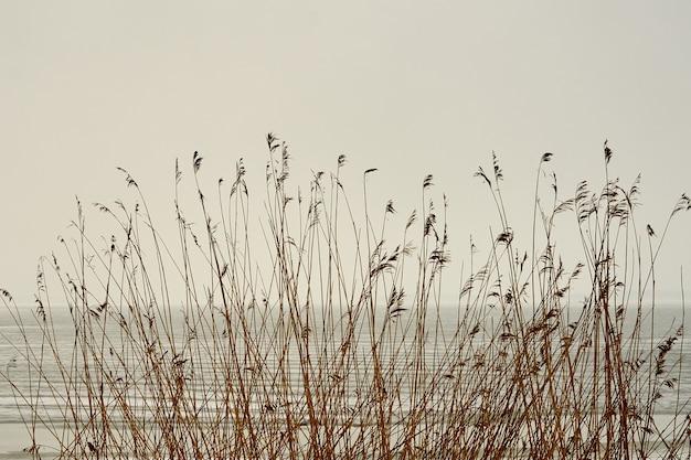 Droge planten op het strand als textuur.