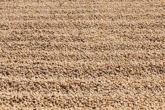 Droge robusta-koffiezaden die in thailand worden geproduceerd