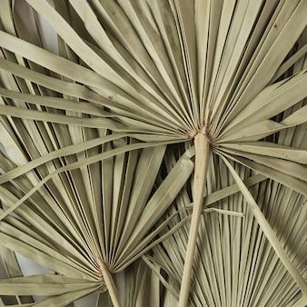Droge tropische exotische palmbladeren op wit.