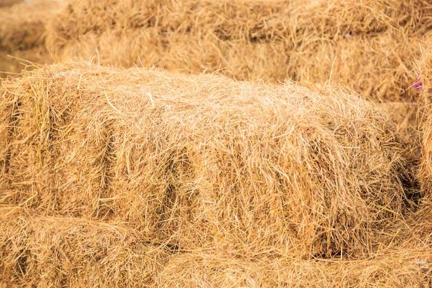 Droge veevoederstrostapel voor de herfstvoorbereiding in de industrie van de landbouwhuisdiervoedselvoeding