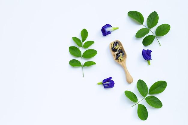 Droge vlinder erwten bloem met groene bladeren op wit