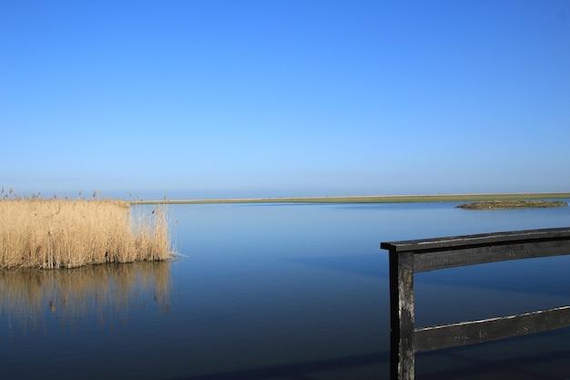 Droge wilde planten groeien in het meer met de lucht