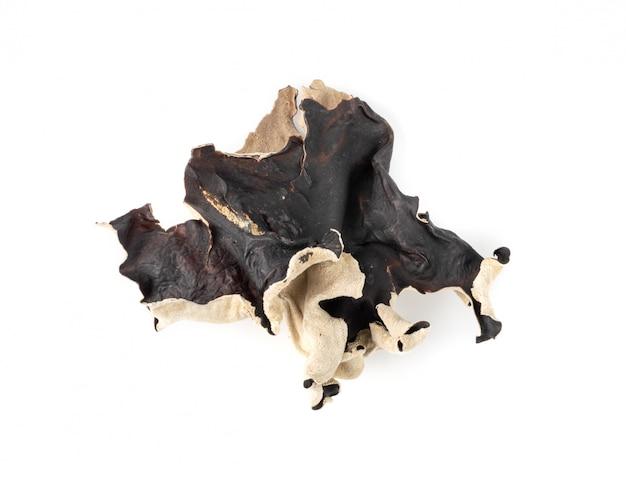 Droge zwarte schimmel, boomoor of houten oorpaddestoel die op witte achtergrond wordt geïsoleerd.