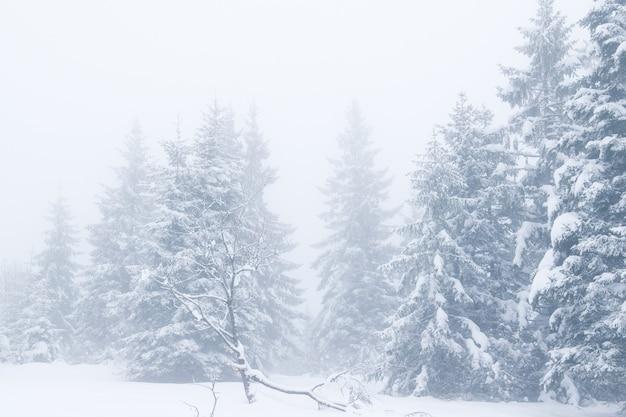 Dromerig de winterlandschap van sneeuw behandelde bomen en mist