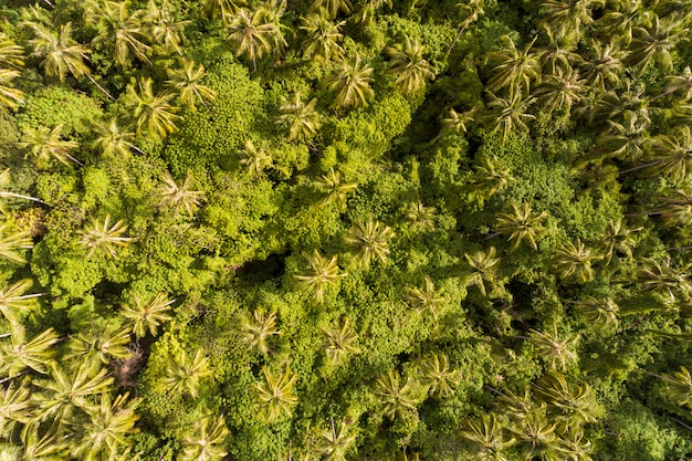 Drone schoot top down van kokospalmen in het regenwoud