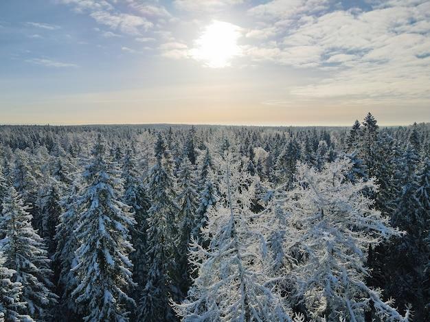Drone shot van bomen bedekt met rijp en sneeuw.