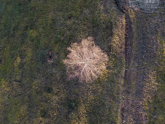 Drone-weergave van een veld bedekt met groen onder het zonlicht bij daglicht