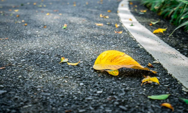 Droog bladeren op de achtergrond van de asfaltweg