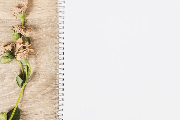Droog bloemtakje op houten en spiraalvormige witte lege achtergrond