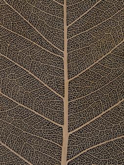Droog bodhi-blad op zwarte achtergrond
