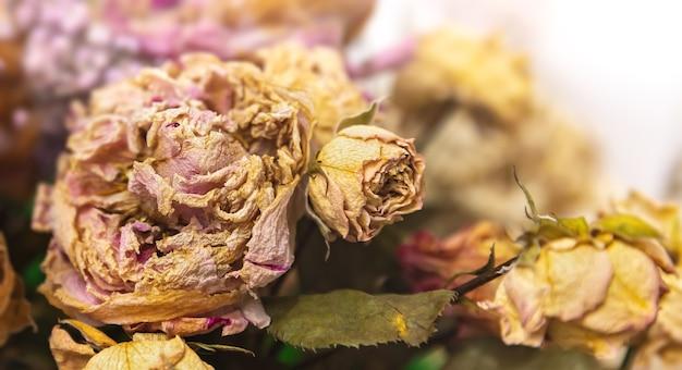 Droog boeket. close-up beeld van gedroogde bloemen in een boeket. leven en dood concept. verdorde bloem