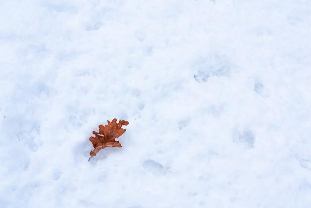Droog eikenblad in de sneeuw