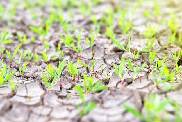 Droog gebarsten land met kleine groene planten