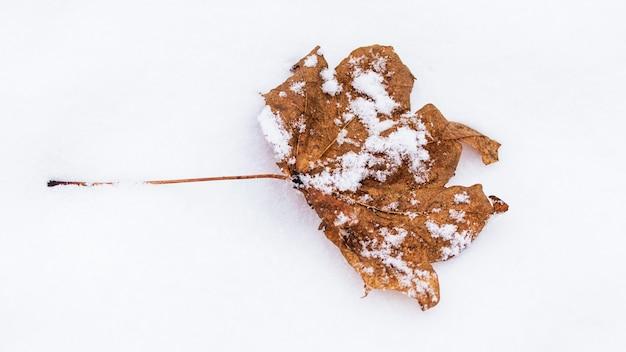 Droog gedroogd esdoornblad op de sneeuw
