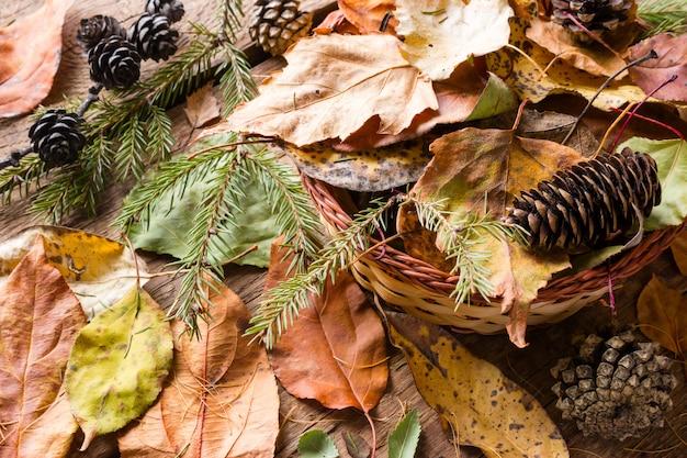 Droog gekleurde bladeren, takken, dennenappels