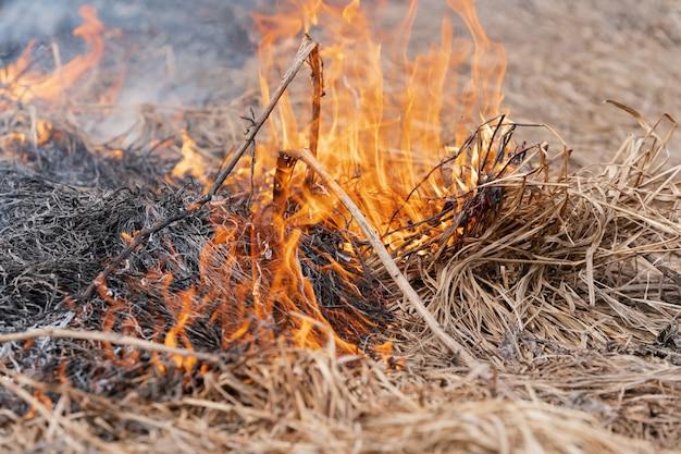 Droog gras dat in de lente in de weide brandt. vuur en rook vernietigen alle dieren in het wild (zachte focus, onscherpte door sterk wildvuur).