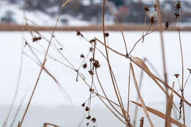 Droog gras en bloemen close-up tegen een wazig bevroren rivier