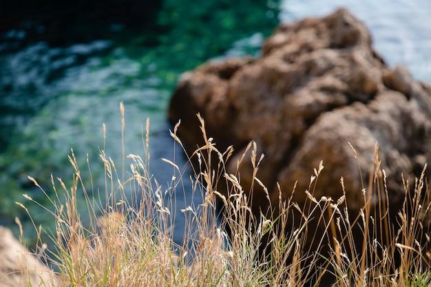 Droog gras en prachtige groene kristalhelder water achtergrond in makarska riviera, kroatië