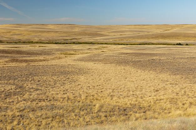 Droog gras in de steppe lege steppe in het landschap van kazachstan
