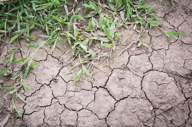 Droog land. gebarsten grond en rick groen