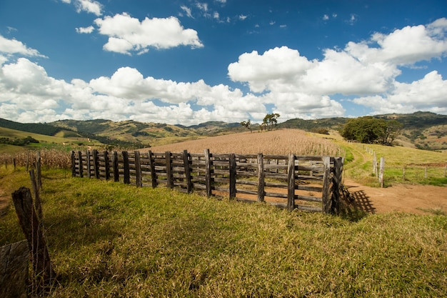 Droog maïsveld onder een blauwe lucht in brazilië. landbouw.