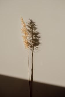 Droog riet met diepe schaduw in de vorm van een boom. klimaatverandering concept. trendkleuren, blogger-stijl