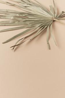 Droog tropisch exotisch palmblad op bleke perzikkleurige pastelkleur