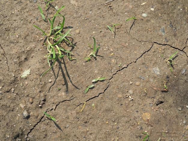 Droogte veroorzaakt door klimaatverandering