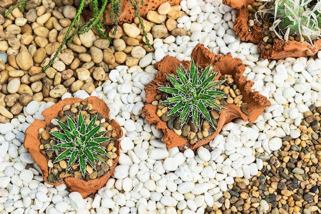 Droogteresistente planten die inheems zijn in halfwoestijngebieden