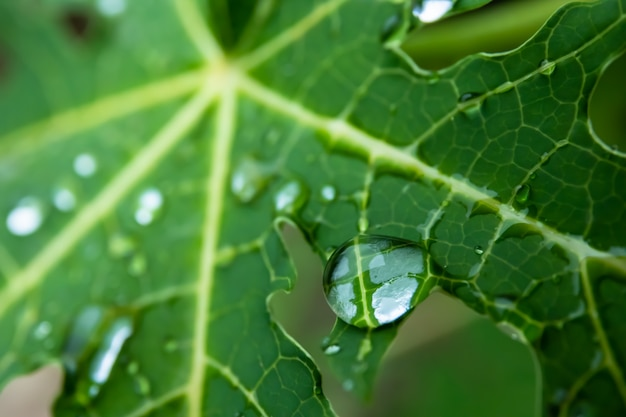 Drop op groen blad