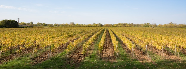Druif wijnland platteland landschap wineyard autumn lights in bordeaux frankrijk
