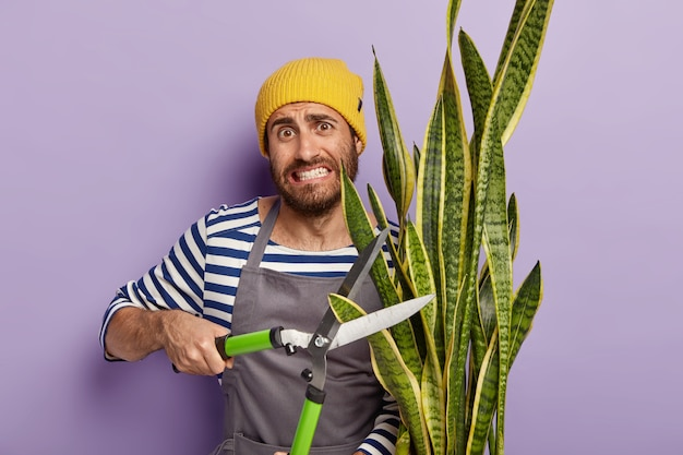 Drukke hardwerkende tuinman snoeit schoonmoederplant voor een goede groei. mannelijke bloemist werkt in bloemenwinkel