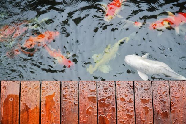 Druppel op houten terras met koi carp japanse vis onder water in koi pond.