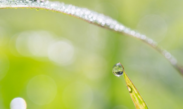 Druppel water op groen blad