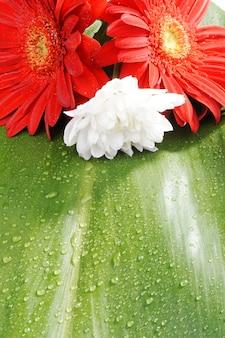 Druppels op bladeren en bloemen