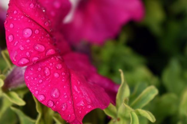 Druppels regen op de knop van een bloem