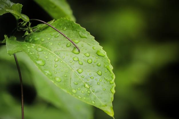 Druppels water op de bladeren in de natuur